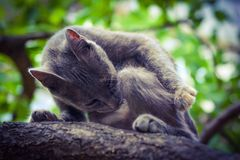 Grey cat on tree, hunter Stock Photo