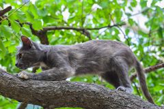 Grey cat on tree, hunter Royalty Free Stock Photo