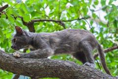 Grey cat on tree, hunter Royalty Free Stock Photo
