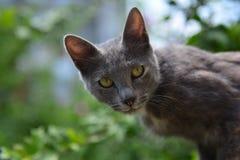 Grey cat on tree Stock Photos