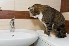 Grey cat and wash basin Royalty Free Stock Photos