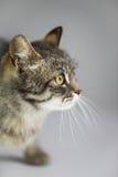 Grey cat on white background stock photo