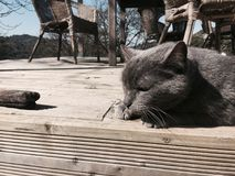 A grey cat on wooden planks. This picture represents a grey cat relaxing on wooden planks. The subject has been shot in similar colors than he gets Royalty Free Stock Photos