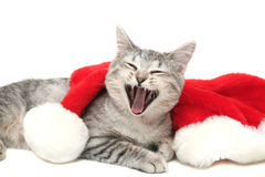 The grey cat yawns. Near to a New Year's cap Royalty Free Stock Photo
