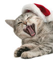 The grey cat yawns near to a New Year's cap Royalty Free Stock Image