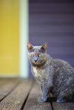 Grey cat with yellow eyes on porch Stock Image