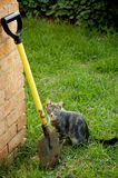 Grey cat with yellow spade Stock Photo