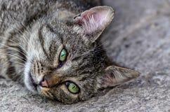 Grey cat. Young grey cat on grevel Stock Photos