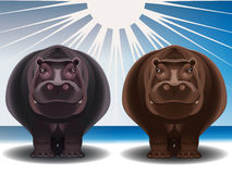 Grey and chocolate hippopotamuses Stock Photo