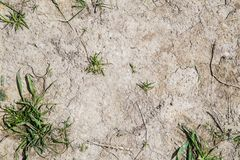 Grey Clay in Drought. With Some Minor Green Shrubbery Royalty Free Stock Image