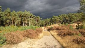 Grey clouds above forest Stock Photo