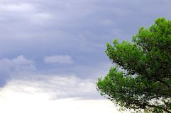 Grey clouds and pine tree. Pine tree and grey clouds on stormy day in a country Stock Photos
