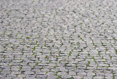 Grey coble stone background. Perspective view of monotone gray brick stone. Sidewalk or pavement with green grass Royalty Free Stock Photos