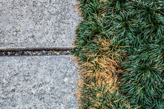 Grey concrete floor of footpath design with green grass background for backdrop Royalty Free Stock Photos