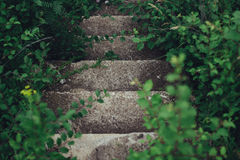 Grey Concrete Stair Case Surrounded by Green Plants Stock Photo