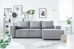 Grey corner sofa. Standing in white living room interior with fresh green plants and many posters royalty free stock photos