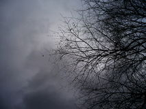 Grey day Royalty Free Stock Photos