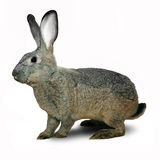 Grey decorative rabbit Royalty Free Stock Image