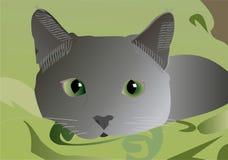 Grey del gatto Fotografie Stock