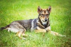 Grey dog Stock Photos