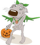 Grey dog in Halloween costume with Jack oLantern. Cartoon grey dog dressed in green wings and hat for Halloween with carved pumpkin Royalty Free Stock Photo