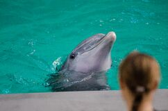 Grey Dolphin on Water in Selective Focus Photography Stock Image