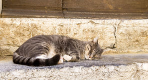 A grey domestic cat sleeping on a step Stock Photos