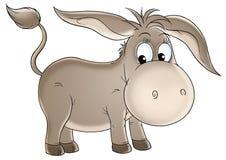 Grey donkey Stock Images