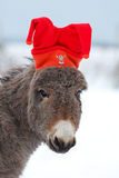 Grey donkey. In red hat Royalty Free Stock Photos