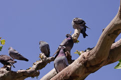 Grey doves and blue sky Royalty Free Stock Images