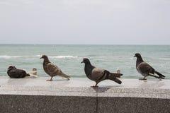 Grey doves resting on beach Stock Photo
