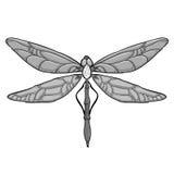 Grey Dragonfly su fondo bianco Illustrazione di vettore per la vostra acqua dolce di design Fotografia Stock