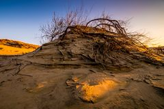 Grey dunes in Lithuania Nida stock image