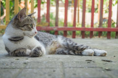 Grey elegant young cat rest. A young cat posing for the camera in a warm summer day Royalty Free Stock Photos