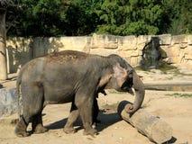 Grey Elephant jouant avec un poteau Photos stock