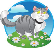 Grey fat cat on the color background Royalty Free Stock Photos