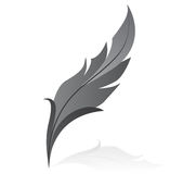 Grey feather. Vectorillustration of grey feather - isolated Stock Images