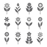 Grey Flowers and Leafs. Vector Illustration. Royalty Free Stock Image