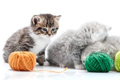 Grey fluffy cute kitties and one brown striped adorable kitten are playing with orange and green yarn balls in white. Photo studio. Wool gray funny amusing royalty free stock images