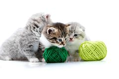 Grey fluffy cute kitties and one brown striped adorable kitten are playing with orange and green yarn balls in white. Grey fluffy cute kitties and one brown Royalty Free Stock Image