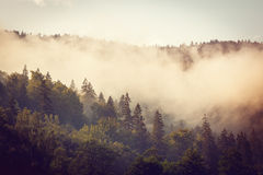 Grey fog under a wood Royalty Free Stock Image