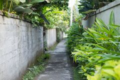 Grey footpath in a park with lots of plants stock photos