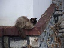 Grey furry cat sleeping. On a wall Royalty Free Stock Photos
