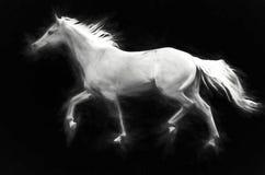 Grey Ghost Lizenzfreies Stockfoto