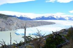 Grey Glacier au parc national de Torres del Paine, Chili image stock