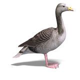 Grey goose. 3D rendering of a grey goose with clipping path and shadow over white Stock Photos