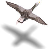 Grey goose in flight. 3D rendering with clipping path and shadow over white Royalty Free Stock Photos
