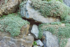Grey granite rocks with green plants. Close up Stock Photography