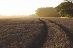 Grey Grass Fields during Golden Hour Stock Photo