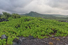 Grey and green. Green hills near the Indian Ocean in the Reunion island stock images